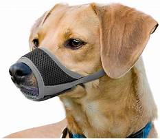 How to keep dog from biting Video