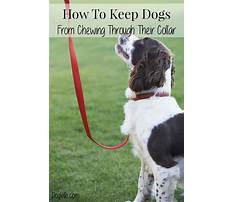 How to keep dogs from chewing Video