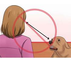 How to make a dog stop biting Video