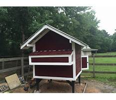 How to make chicken coop less smelly Video