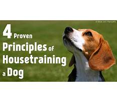 How to potty train older dogs.aspx Video