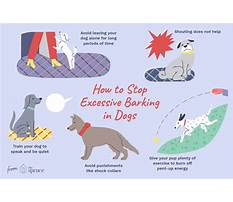 How to stop a dog from barking so much Video
