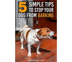 How to stop dogs barking Video