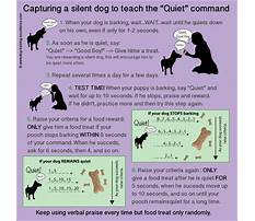 How to stop dogs from barking at people Video
