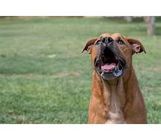 How to stop nuisance dog barking Video