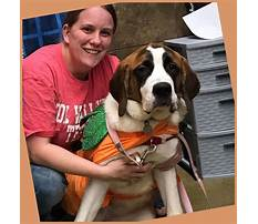 How to stop puppy from biting feet Video