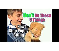 How to stop puppy nipping Video