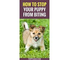 How to stop puppy play biting Video