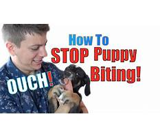 How to train a dog not to bite you Video