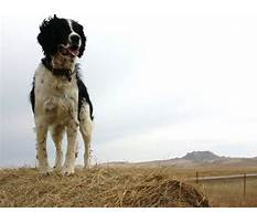 How to train a dog not to mark.aspx Video