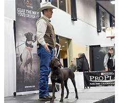 How to train a dog to follow.aspx Video