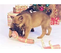 How to train a dog to track scents.aspx Video