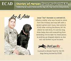 How to train a service dog for balance.aspx Video