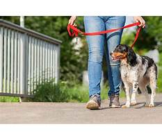 How to train an older dog Video