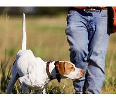 How to train bird dogs.aspx Video