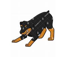 How to train boxer to be guard dog.aspx Video