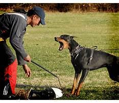 How to train doberman dog.aspx Video