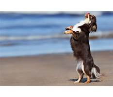 How to train dog dancing Video