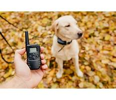 How to train dog electronic collar Video