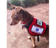 How to train dog to be a service dog.aspx Video
