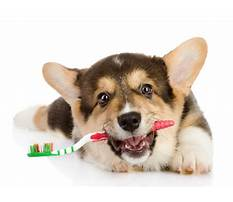 How to train dogs not to chew.aspx Video
