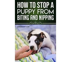 How to train my dog to stop biting Video