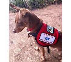 How to train your dog to be a sevice dog.aspx Video