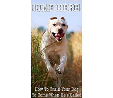How to train your dog to come every time Video