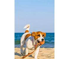 How to train your dog to go potty outside.aspx Video