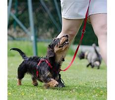 How to train your dog to not be destructive.aspx Video