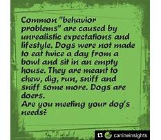 How to train your dog to search for intruders.aspx Video