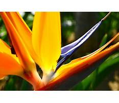 How to train your dog to stop being whiny.aspx Video