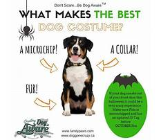How to train your dog to wear a muzzle.aspx Video