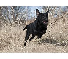 How to train your working dog.aspx Video
