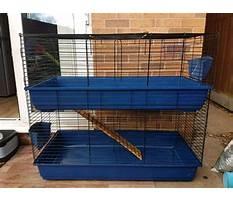 Huge indoor rabbit enclosures Video