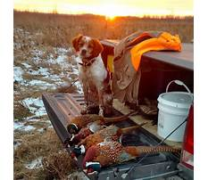 Hunting dog training mn.aspx Video