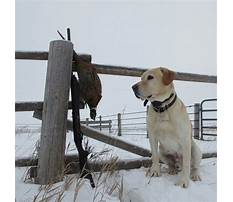 Hunting dog training st cloud mn.aspx Video