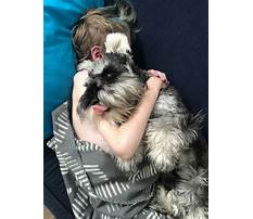 In home dog training perth.aspx Video
