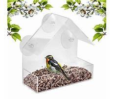 In window bird feeder.aspx Video