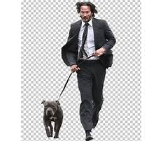 John suits dog training Video