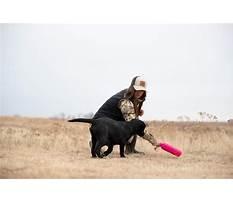 Johnny miller dog training lake whitney Video