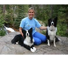 Joni johnson godsy dog training Video
