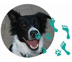 Joondalup dog agility training Video