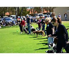 Joondalup dog training club Video