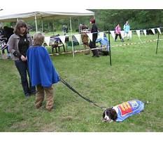 Jublea dog training Video