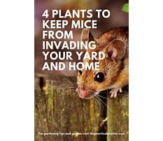 Keep mouse away.aspx Video