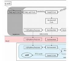 Ketone metabolism diet Video