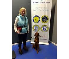 Lansing mi service dog training for diabetes.aspx Video