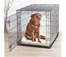Large dog cages for cheap Video