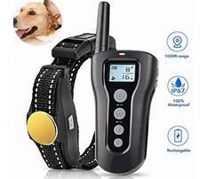 Large dog training collar reviews.aspx Video